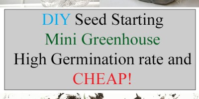 DIY seed starting mini greenhouse with high germination rate and cheap!