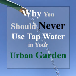 Why you should never use tap water in your urban garden