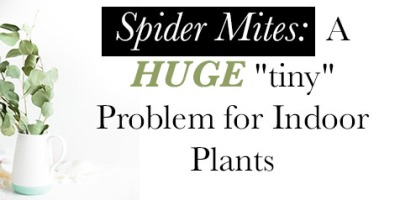 "Spider mites: A huge ""tiny"" problem for indoor plants"