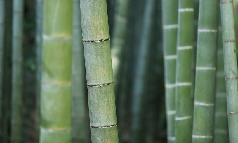 Save the world with eco-friendly bamboo home decor products.
