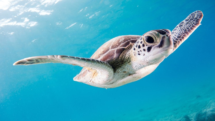 Save the sea turtles with eco friendly plastic alternatives