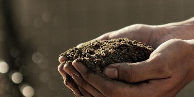 The best of the best organic potting soil