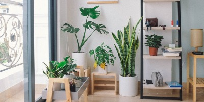 Indoor Houseplants Garden Activity
